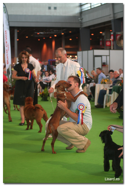 parisdogshow