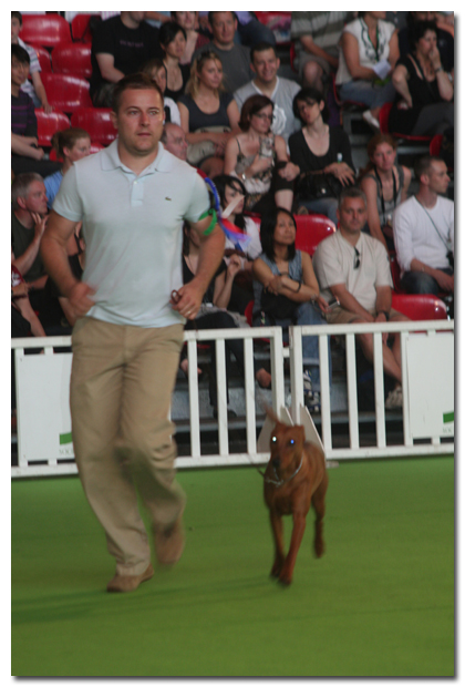 ringshowdog