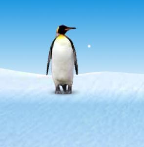 Penguin show