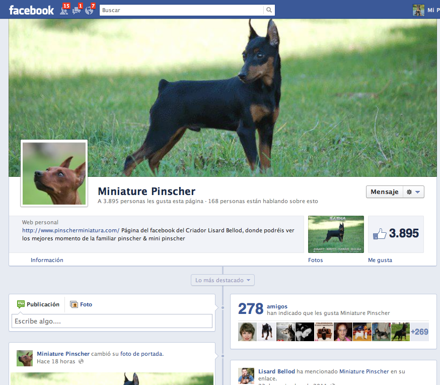 facebook pinscher