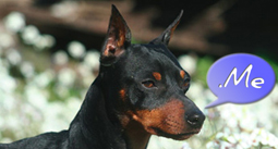 pinscher me