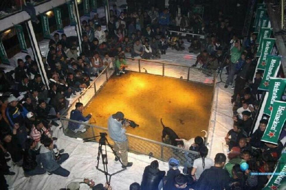 pelea de perros y heineken