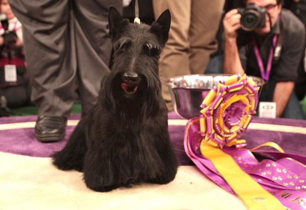 exposiciones caninas