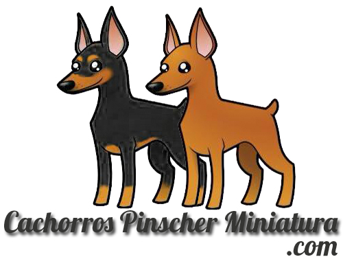 cachorros pinscher miniatura