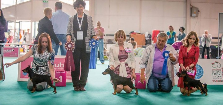 bob world dog show