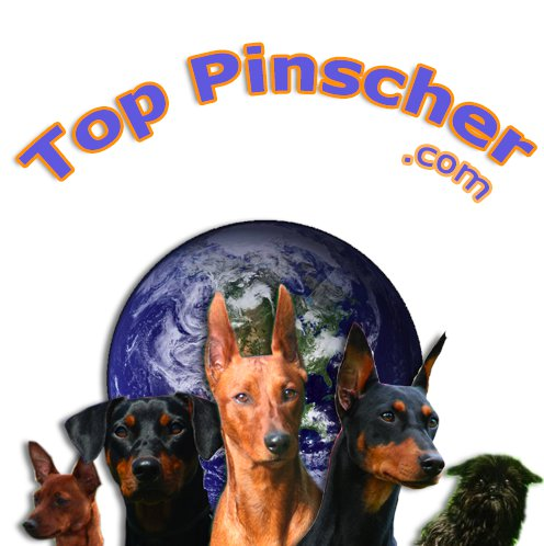 Top pinscher
