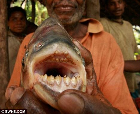 pez come testiculos