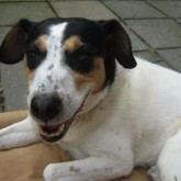 foto perro feliz 2
