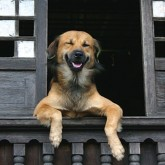 foto perro feliz balcon