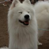 foto perro feliz blanco