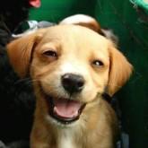 foto perro feliz cachorro