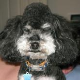 foto perro feliz con tupe
