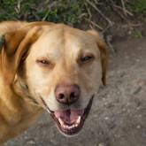 foto perro feliz de paseo