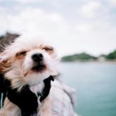 foto perro feliz en el lago