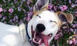 foto perro feliz entre flores