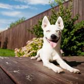 foto perro feliz jardin