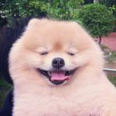 foto perro feliz peludo