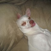 foto perro feliz sofa