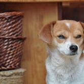 foto perro feliz zen