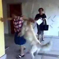 perro monta abuela