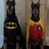 batman y robin dog dobermann
