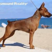 doinusmound Realitity