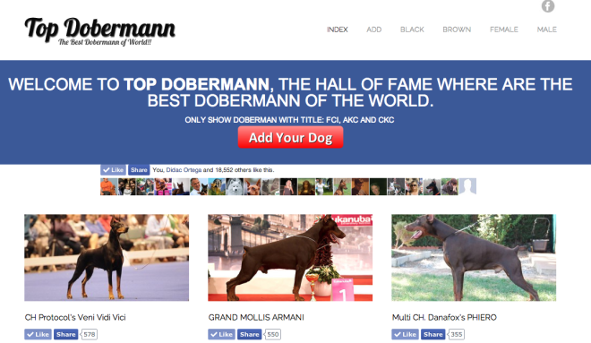 Top dobermann