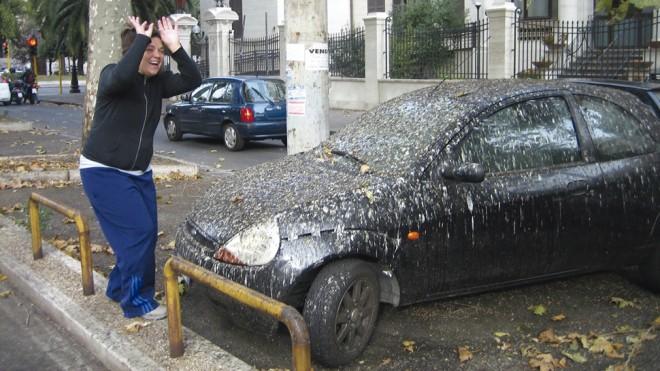 paloma caca coche limpiar