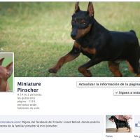 mini pinscher facebook