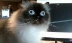 cara gato ojos saltones
