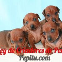 ley-criadores-perros